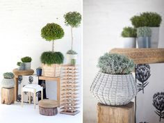Okasie needs no introduction here in South Africa. But, for those who don't know them , they are one of the leading floral design companies in South Africa. Okasie is renowned for their unique floral compositions, which they like to call floral art.