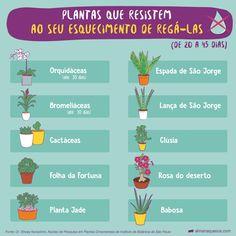 Garden Terrarium, Succulents Garden, Garden Plants, Planting Flowers, Clusia, Eco Garden, Indoor Garden, Garden Farm, Nature Plants