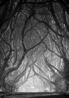 """Entwined - The Dark Hedges"" ~ by Gary McParland, taken in Armoy, County Antrim, Northern Ireland. The Dark Hedges is an avenue of 300 year old beech trees situated along Bregagh Road, 3 miles from the village of Stranocum. // I love this road. Beautiful World, Beautiful Places, Beautiful Pictures, Amazing Places, Dark Hedges Ireland, Tree Photography, Classic Photography, Artistic Photography, Landscape Photography"