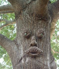 Attrayant Tree Faces By Christo Venter | Tree Faces/ Boomgesigte | Pinterest | Tree  Faces, Face And Gardens