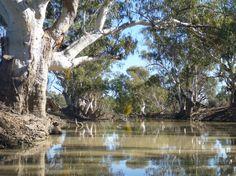 Australian Bush, Vivarium, South Australia, Exploring, River, Mood, Country, Beach, Outdoor