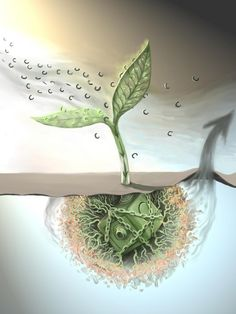 """Dirty pool: Soil's large carbon stores could be freed by increased CO2, plant growth""  An increase in human-made carbon dioxide in the atmosphere could initiate a chain reaction between plants and microorganisms that would unsettle one of the largest carbon reservoirs on the planet -- soil. Researchers developed the first computer model to show at a global scale the complex interaction between carbon, plants and soil.  http://bit.ly/1vD59LO"