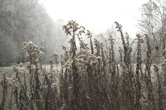 Frost by Agnieszka  Kania on 500px