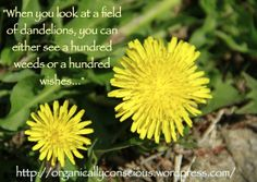 Visit the post for more. Dandelions, Consciousness, Weed, About Me Blog, Organic, Plants, Knowledge, Marijuana Plants, Plant