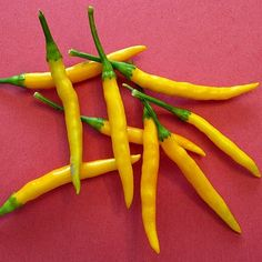 Thai Yellow Chile,  Burapa Pepper, 15 heirloom seeds,  VERY HOT, great fresh or dried, bushy plants, golden fruit