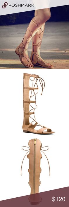 Michael Kors Sofia gladiator sandal Worn a couple of times great condition. Lace up leather beige sandal comes with box Michael Kors Shoes Sandals