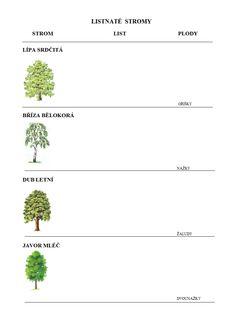 LISTNATÉ STROMy - PRACOVNÍ LIST PRO DETI.doc Biology, Herbs, Education, Projects, Herb, Onderwijs, Learning, Ap Biology, Medicinal Plants