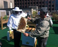 Beekeeping on top of NYC's Waldorf Astoria, treehugger.com