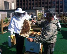 Beekeeping on top of NYC's Waldorf Astoria, treehugger.com