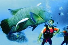 Fraser Coast Dive Sites Attractions - Tourism Fraser Coast QLD