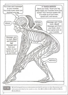 Welcome to Dover Publications : BOOST My First Human Body