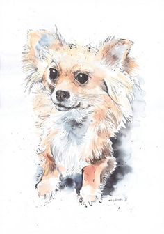 ARTFINDER: Long haired Chihuahua by Luci Power - Original Pen and Ink drawing with watercolour of a Long haired Chihuahua drawn and painted in March 2016, using watercolour paper, Indian ink, dip pen and Sc...