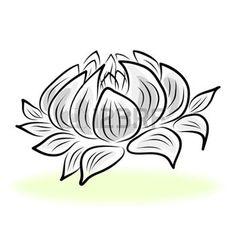 dessin fleur: dessin à la main nénuphar, lotus, fleur.