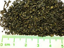 """Salvia divinorum is a psychoactive plant which can induce dissociative effects and is a potent producer of """"visions"""" and other hallucinatory experiences. Its native habitat is in cloud forest in the isolated Sierra Mazateca of Oaxaca, Mexico. Mazatec shamans (use) it to facilitate visionary states of consciousness during spiritual healing sessions. Most of the plant's local common names allude to the Mazatec belief that the plant is an incarnation of the Virgin Mary..."""