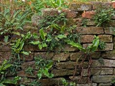 Firewood, Brick, Recycling, Herbs, Decay, Green, Decorating, School, Wall