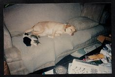 Vintage Photograph Puppy Dog & Two Cute Cats / Kittens Sleeping on Couch in Collectibles, Photographic Images, Vintage & Antique (Pre-1940) | eBay!