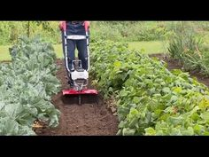 The Mantis XP Extra-Wide Tiller is Built for Bigger Yards and Gardens with a 16 Inch Tilling & Cultivating Width, Featuring a Premium Honda® Engine. Small Garden Tiller, Small City Garden, Small Gardens, Best Garden Tools, Hardy Plants, Closer To Nature, Gardening For Beginners, Planting Seeds