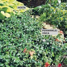"""DIY Tip of the Day: Shade Solutions. Reseeding that shady strip of """"almost"""" lawn year after year gets old, doesn't it? So stop trying so hard. Instead, plant shade-loving ground covers. For a lush, textured look, blend ajuga, periwinkle, euonymus, pachysandra and hosta. These ground covers are all hardy through Zone 4, can take light foot traffic and are vigorous spreaders."""