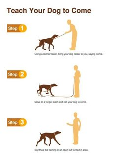 Teach your dog to come #infographic
