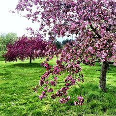 Spring at Wisley RHS