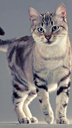 Blue-eyed kitty