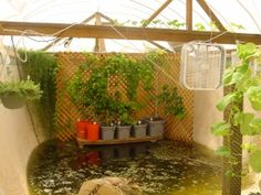 These people converted a swimming pool into a hydroponic organic garden and talapia farm complete with chickens.  Amazing!