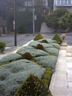 This intimately scaled and finely detailed entry garden in San Francisco's Pacific Heights neighborhood becomes a cake-like confection of Boxwood, Santolina, and Barberry. Precast finials and pavers in a subtle check pattern create the backbone of the hardscape. Waves of roses and mixed perennials grace the edges of the property. The driveway paving stones creates a grid softened with corsican mint, bringing a fragrance to each arrival.