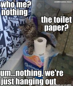 Hanging with the toilet paper :)