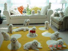 Oodies of Poodles, 101 Poodles.