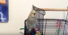Bird Lip-syncing To Song
