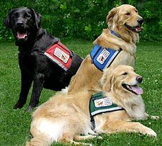 Service dogs.