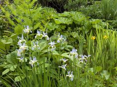 Plants That Like Wet Soil - If you can't divert accumulating water, install plants that don't mind getting wet feet from time to time. Repinned by www.watersidenursery.co.uk #boggysoil #boggardens