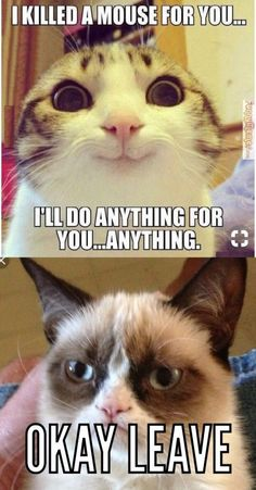 """"""" """"No, LEAVE."""" A combination of cute cat and grumpy cat. Perfect way to reject some unwanted confessions. Grumpy Cat Quotes, Funny Grumpy Cat Memes, Funny Cat Faces, Cat Jokes, Funny Relatable Memes, Funny Cats, Funny Jokes, Funny Minion, Cats Humor"""