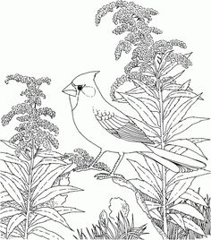 nature coloring pages for adults coloring pages of