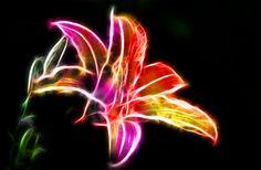 Fractal Tiger Lily by minimoo64.deviantart.com