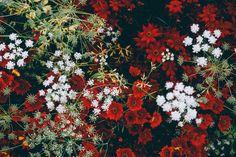 Wild Flowers Photo  Flowers Photo  Botanical by Photoprintsshop