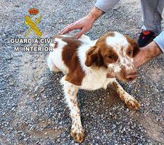 http://www.eltriangulo.es/contenidos/?p=66605 El triángulo » Detenido un hombre en Onda por robar un perro en Betxí y maltratarlo