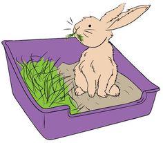 proper liter box for rabbit