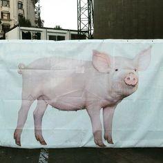 #ladygaga #pig in #bucharest #romania #pigsofinstagram #pigsoftheworld #pigstagram #concert #oinkoink