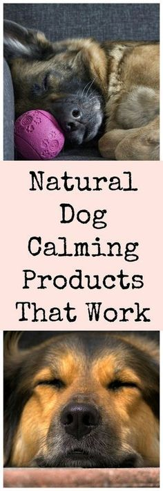 Natural remedies to calm anxious dogs. #DogProducts
