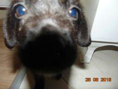 Love ya puppy!!!