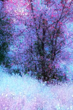 Purple and blue forest.