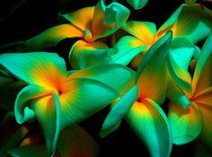 Tropical Flowers  St. Thomas Virgin Islands