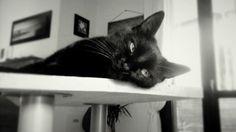 Pixie Black cat
