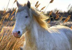 Camargue horse - Wolfgang Staudt