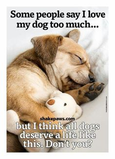 YES I TOTALLY AGREE ALL DOGS DESERVE A LIFE LIKE THIS.