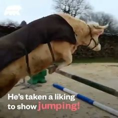 Horses (@horsesclubb) • Instagram-foto's en -video's Saddle Pads, Show Jumping, Horses, Photo And Video, Videos, Instagram, Photos, Wild Horses, Amor Quotes