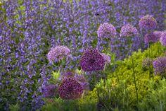 POLEĆ COŚ DOBREGO:  sylwia: Rośliny, które skutecznie odstraszają kle...