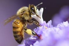 Hey honeybuns, it's that time of night for your daily dose of buzz. Did you know that bees have a positive charge and plants have a…