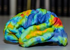 Prevue Medical 3D printed in multicolor. This model shows the correlation between resting-state BOLD MRI time courses in one hemisphere of the human brain. #3dprinting